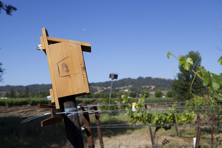 Bluebird box in Matthiasson vineyard Napa