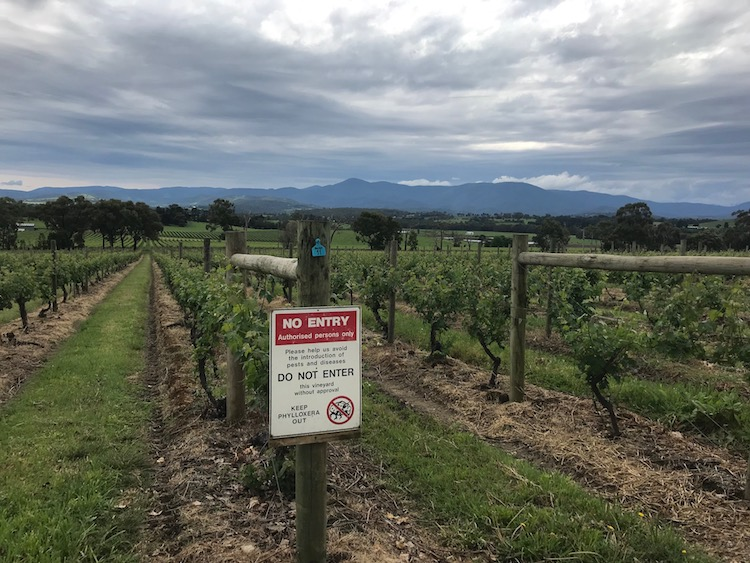 Phylloxera warning at Yarra Yering vineyard in the Yarra Valley, Australia