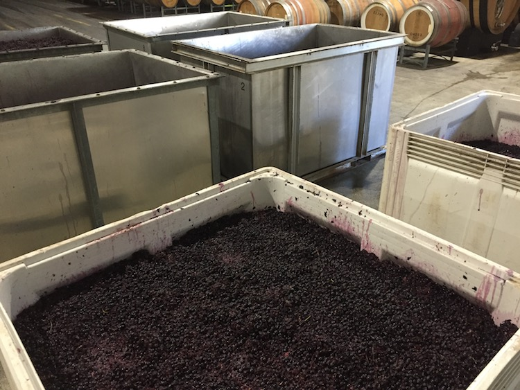Fermenting the 2020 Barossa Valley harvest in picking bins