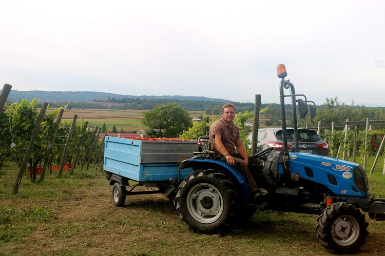 Andrea harvesting at Tappero Merlo