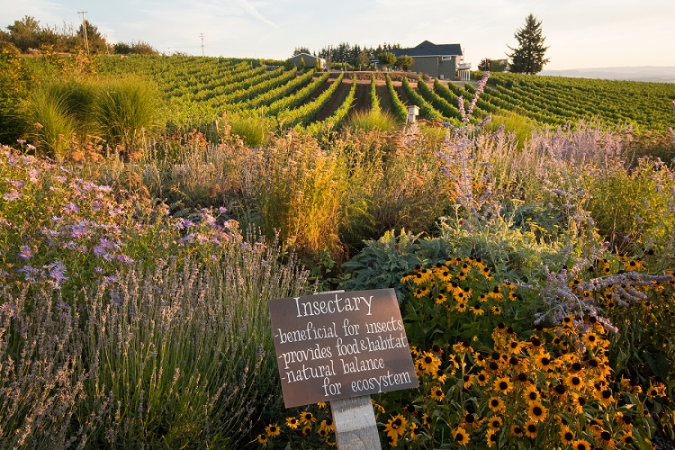 Brooks Wines insectary, Oregon