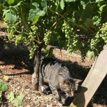 Bordeaux 2019 fruit set with Ch Bauduc cat