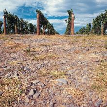Gimblett gravel and vines in Hawke's Bay, New Zealand