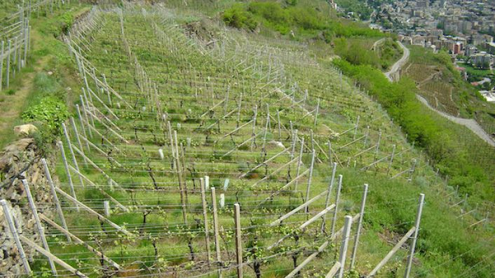 Ar Pe Pe vineyards above the winery in Valtellina