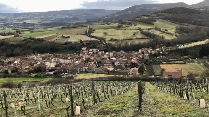 Vines sloping down to the village of Boudes