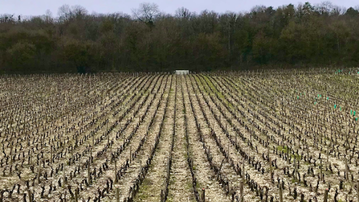 The Hautes Cotes of Burgundy in winter