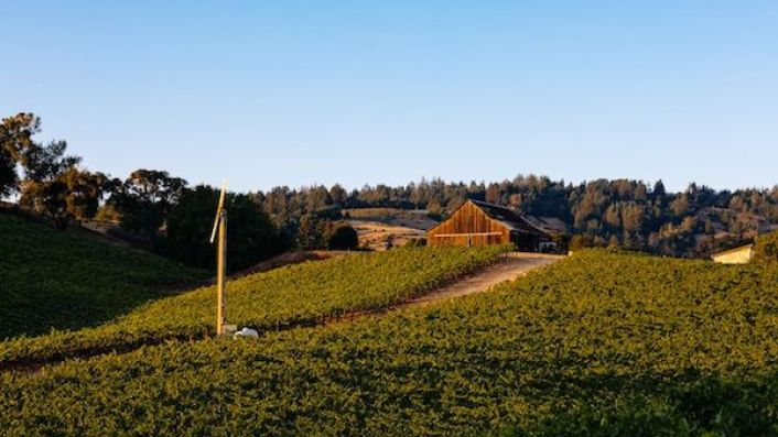 Maggy Hawk vineyard in Anderson Valley, Mendocino with barn