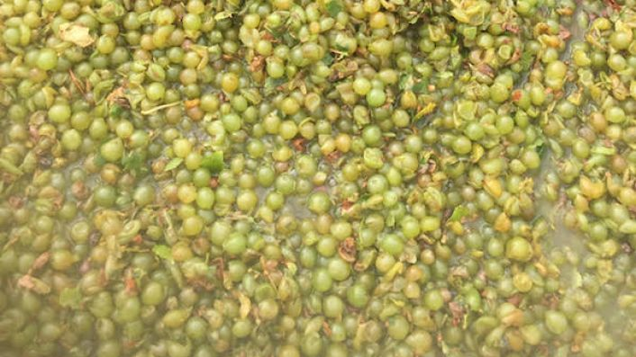 2020 Sauvignon Blanc grapes from Hawke's Bay sub-region Tuki Tuki
