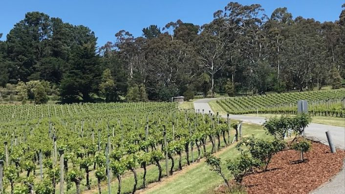 Tiers vineyard at Piccadilly in the Adelaide Hills on 29 October 2019