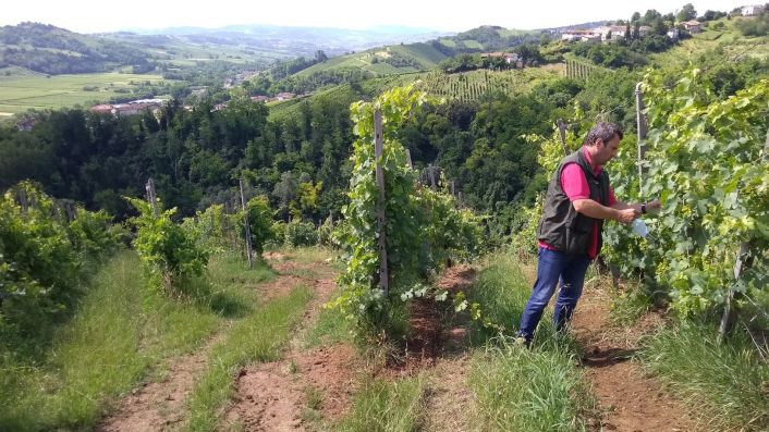 Andrea Picchioni in his vineyards in Lombardy