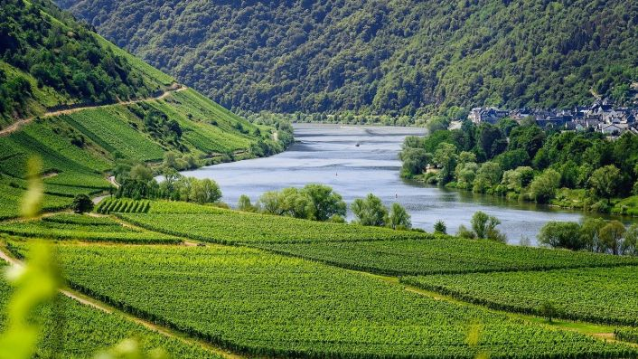 flat Mosel vineyards