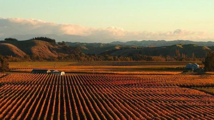Gimblett Gravels vines in autumn, Hawke's Bay, New Zealand
