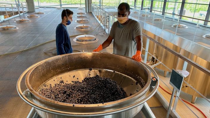 Small Cabernet harvest on 23 September 2020 at Ch Beychevelle