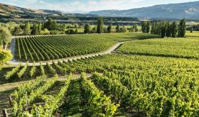 Felton Road organic vineyard in Central Otago