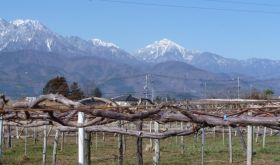 MBA vineyard Hosaka with Kai-Komagate mountain in the background