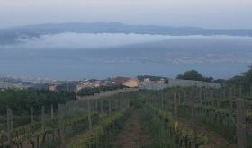 Casematte vineyard overlooking Straight of Messina