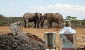 Elephant Gin with two elephants in background