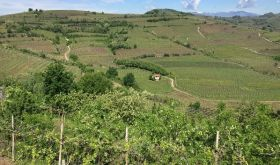 Gini's La Frosca vineyard in Soave