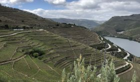 Quinta do Seixo vineyards overlooking the Douro river