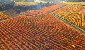 St Jacques d'Albas vineyards autumn 2015