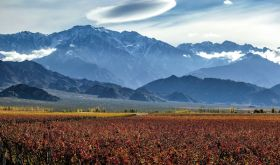 Primera Zona vineyards in Mendoza, Argentina with the Andes in the background