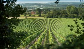 Chapel Down's Kit's Coty vineyard in Kent, England