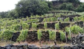 Barbacan vineyard in Valtellina
