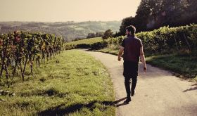 Johannes Jülg strides out into his vineyards on the Franco-German border