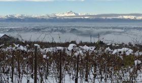Snow in Verduno, Barolo on 15 November 2019
