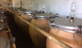 Amphorae at Montesecondo winery
