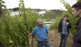 Stephen Henschke in their Lenswood vineyard before the 2019 Adelaide Hills fire