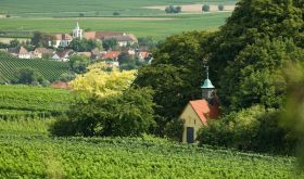 Heiligenkirche vineyard by Neiss of the northern Pfalz