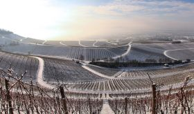Wirsching Franken vineyards in winter