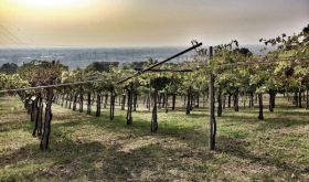 Arcari + Danesi's Grace vineyard overlooking the plain of Brescia
