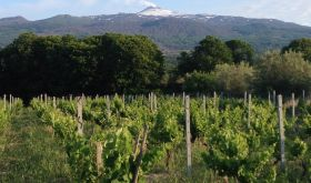 Ayunta vineyards with Etna