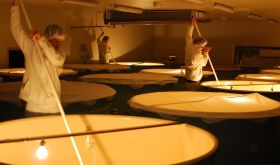 Dassai sake fermentation in Japan