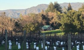 Phoenix vineyard being replanted by Steve and Jill Matthiasson in Oak Knoll District, Napa Valley