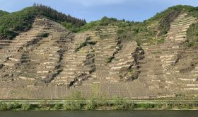 Winninger Uhlen, Germany's second-steepest vineyard