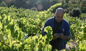 Les Clos Perdus - Paul Old in one of his vineyards