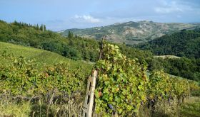Vineyards near Predappio, Romagna