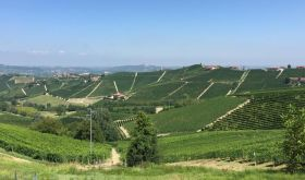 View from Tre Stelle towards Barbaresco with the crus of Martinenga and Rabajà in the distance.