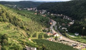 View from the ruined Senftenberg castle across the Pellingen vineyard to the town the town