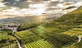 Achleiten vineyard in Wachau, Austria by Robert Herbst