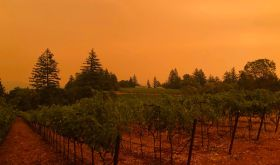 orange twilight seen from Lamborn Vineyards