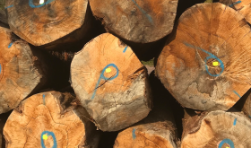Oak trees stacked at Francois Freres cooperage