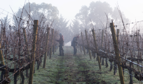 Winter pruning at Curly Flat in Macedon Ranges, Victoria, Australia