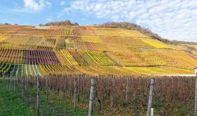 Marienthal vineyards in late October in the Ahr valley, Germany