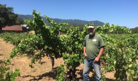Will Bucklin, Sonoma vine grower