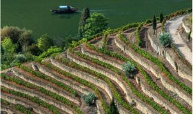 Douro terraces