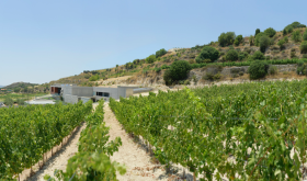 Vlassides winery Cyprus